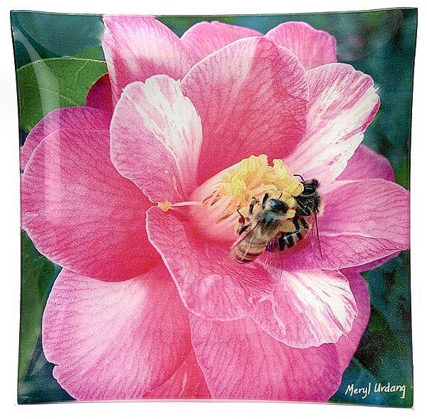 CP4 Camellia-Bees