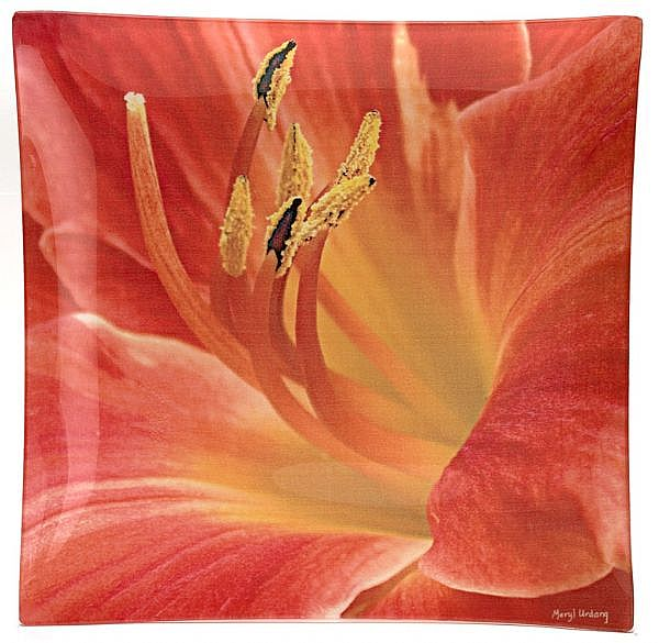 O8 Day Lily