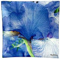 B5 Blue Iris - Click for Detail