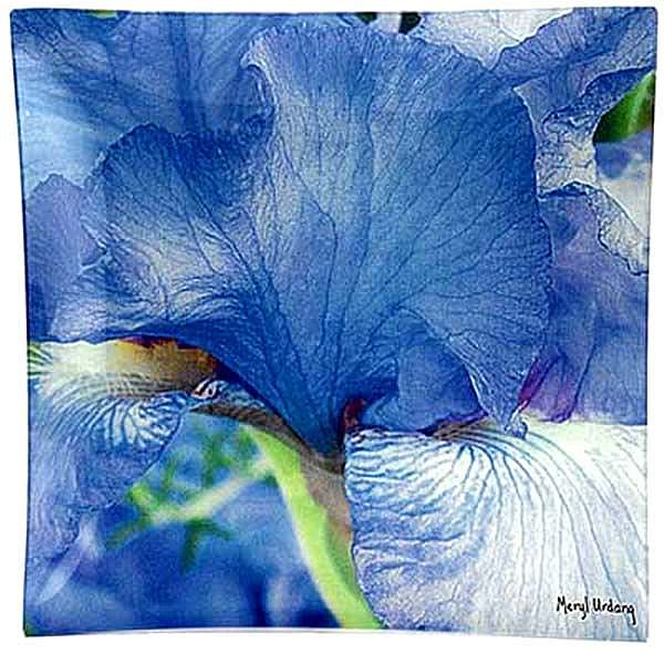 B5 Blue Iris